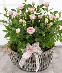 Rose Basket*