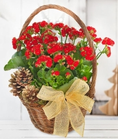 Red Kalanchoe Basket